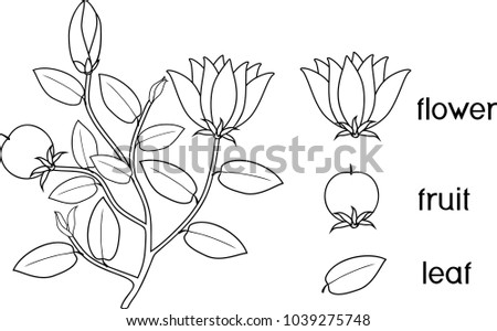 Coloring Page Parts Plant Morphology Flowering Stock Vector