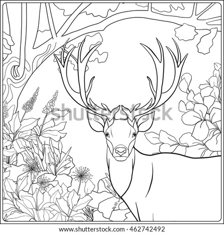 Coloring Page With Deer In Forest Book For Adult And Older Children Vector