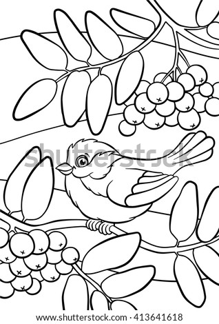 Coloring Pages Birds Little Cute Titmouse Sits On The Mountain Ash