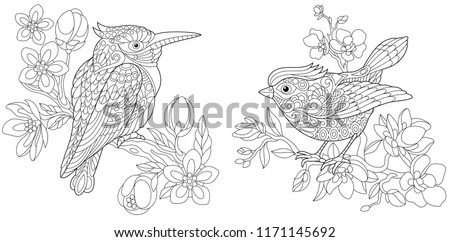 Coloring Pages Book For Adults Colouring Pictures With Kingfisher And Canary Bird