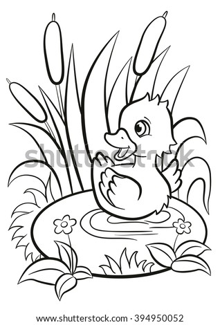 cute duck coloring pages - duck pond stock images royalty free images vectors