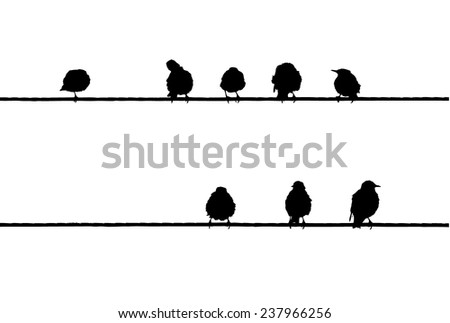 Common Starlings on the power line silhouette - stock vector