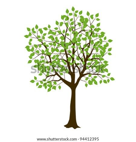 Common tree - stock vector