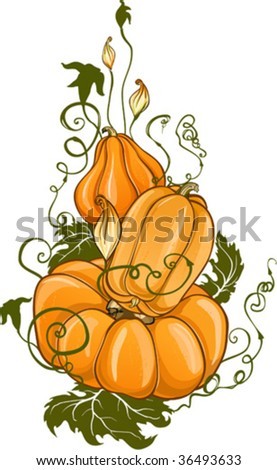 composition with ripe Pumpkins - stock vector