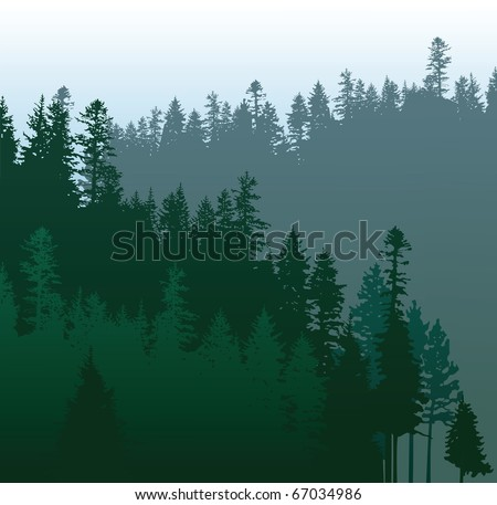 coniferous forests - stock vector