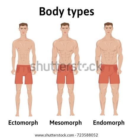 how to build ectomorph body