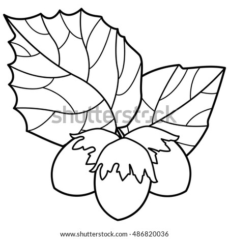 Contour illustration of the hazel leaf and nuts icon