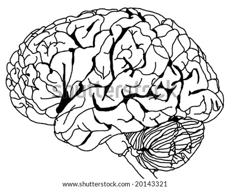 Contour Line drawing of a brain (vector)
