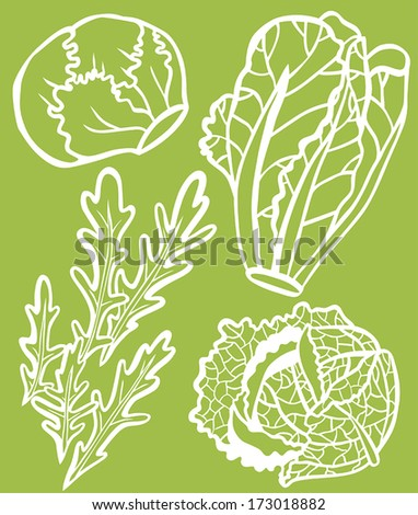 Cool Lettuce Selection Set: Rocket, Savoy Cabbage, Romaine and Iceberg - White Outline on Green Background - stock vector