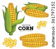 Corn Compositions, Corn Seed, Corn Vector, Corn illustration. Corn Isolated on White Background. Bunch of Corn. Corn Set. - stock vector