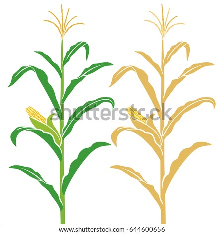 Tribalium 39 s portfolio on shutterstock for Corn stalk template