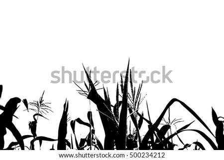 corn stalks tracing. Vector