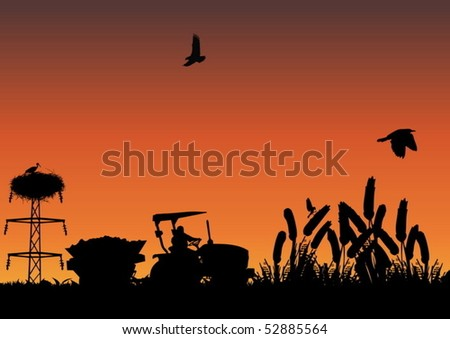 Cornfield - stock vector