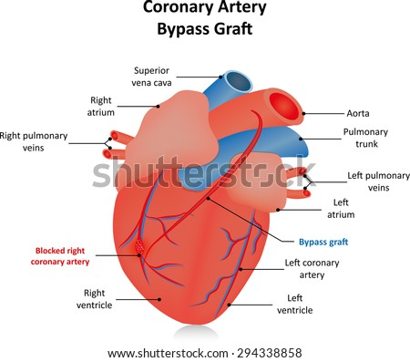 Heart diagram labeled english online schematic diagram coronary artery bypass graft labeled diagram stock photo photo rh shutterstock com circulatory system heart diagram ccuart Images