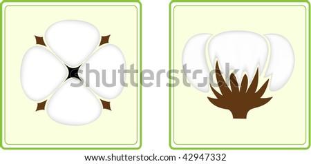Cotton. - stock vector