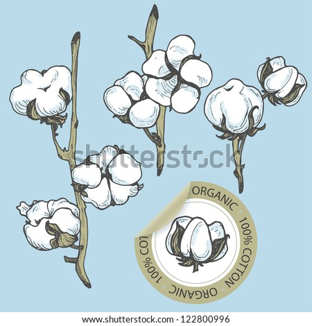 Cotton set with sticker in vector - stock vector