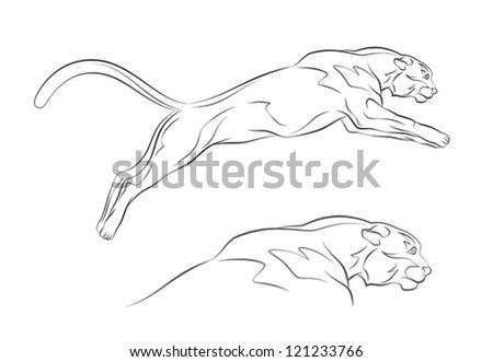 Cougar - stock vector