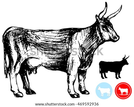 Angus Bull Stock Photos, Royalty-Free Images & Vectors - Shutterstock