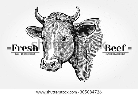 "Cows head, hand drawn in a graphic style. With the words ""Fresh beef"". - stock vector"