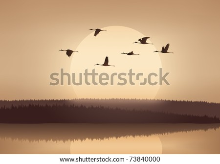 Crane flying at sunset