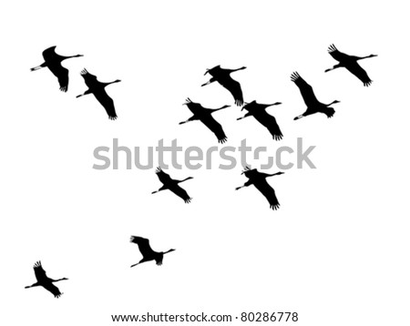 Cranes-fly in formation, silhouette, vector, illustration