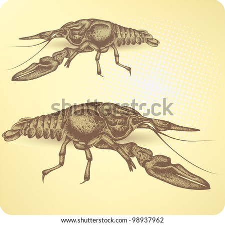Crayfish, hand-drawing. Vector illustration. - stock vector