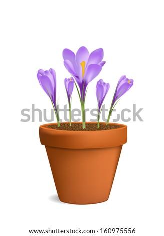Crocuses in flowerpot vector illustration - stock vector