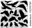 Crow and feathers silhouettes illustration collection background vector - stock vector