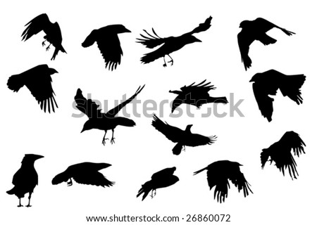 crows  flying, vector silhouette collection