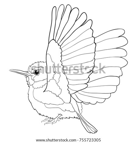 Cuban Coloring Tody Bird Exotic Vector Illustration