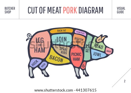 diagram of beef brisket cut meat set poster butcher diagram stock vector 441307615