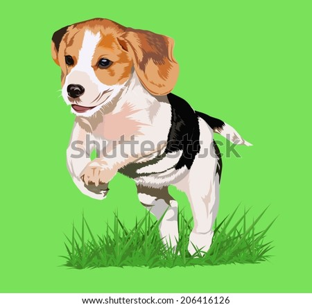 cute Beagle puppy 3 months running happy over the meadow  - stock vector
