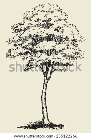 Cute big mighty green deciduous tree with lush leaves in thick grass. Vector monochrome freehand sketchy linear ink drawn backdrop in style pen on paper with space for text on sky - stock vector