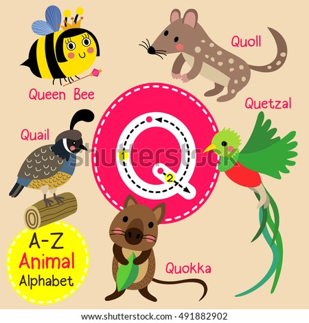 animal with letter q vocabulary stock photos royalty free images amp vectors 4782