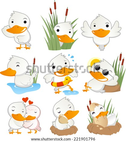 Cute duck in action set collection, with duck in different situations like, standing duck, hiding duck, flying duck, swimming duck, in love duck and taking care of baby ducks vector illustration.  - stock vector