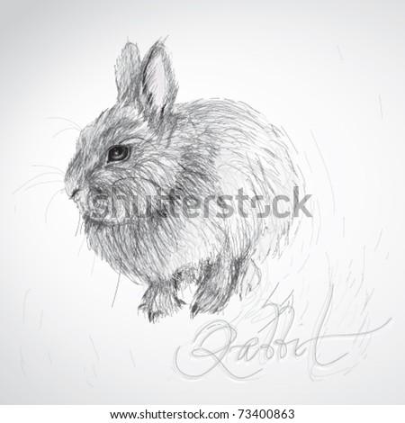 Realistic rabbit illustration - photo#27