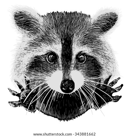 Raccoon Stock Images, Royalty-Free Images & Vectors ... Raccoon Face Clip Art Black And White