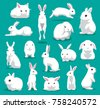 cute white rabbit poses cartoon ...