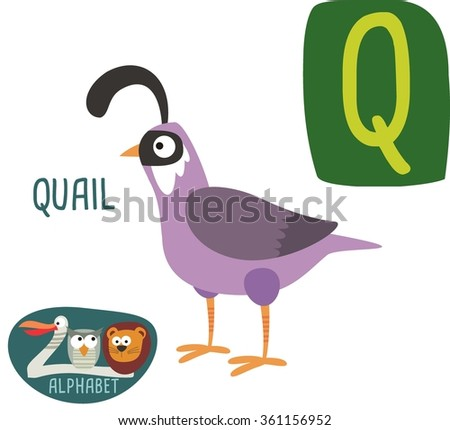 Cute zoo alphabet in vector. Q letter for Quail. Funny cartoon animals. Alphabet design in a colorful style.  - stock vector