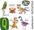 Cute zoo alphabet in vector. Q letter. Funny cartoon animals: Quetzal, Quail, Queen Bee, Quoll, Quokka. Alphabet design in a colorful style.  - stock vector