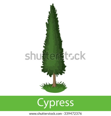 Cypress cartoon icon. Single symbol on a white background  - stock vector