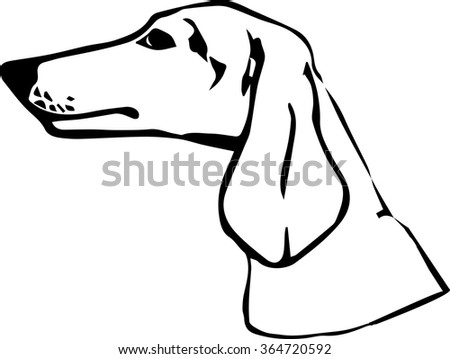 Dachshund dog vector illustration. Hand drawn medium dog portrait. Purebred dog illustration. Sketch of dachshund.