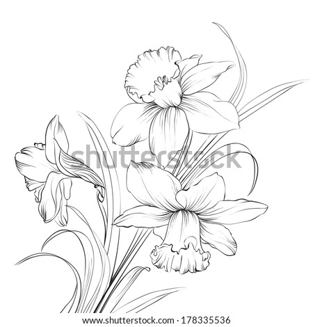 Daffodil flower or narcissus isolated on white. Vector illustration. - stock vector