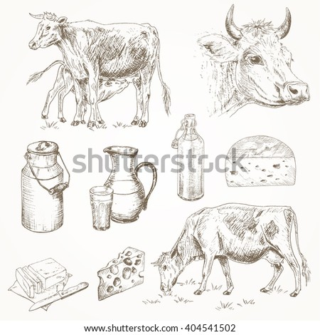 Dairy cattle farm sketch set. Cow eating grass, cute calf drinks milk, cow's head, milk products. Milk cans, bottle, cheese, butter. Dairy cattle farm vector illustration. Drawing dairy farm  - stock vector