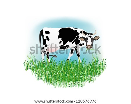 Dairy cow over white background - stock vector