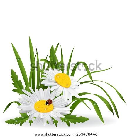 daisy - stock vector
