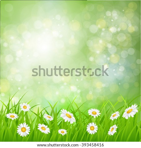 daisy vector background summer design flower green garden nature illustration. Spring background with grass, daisies and bokeh lights.