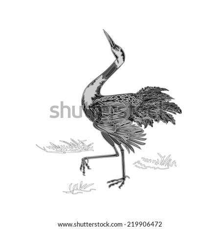 Dancing crane wildlife animal neck engraving vintage vector illustration   - stock vector
