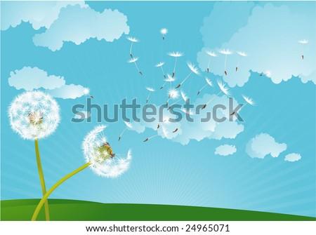 Dandelion in the wind. Vector background. - stock vector