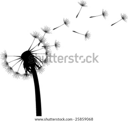 Dandelion in white background